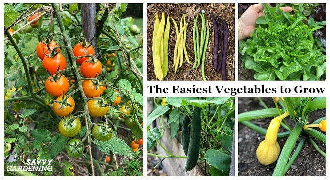 Name: easiest-vegetables-to-grow2.jpg Views: 14 Size: 91.8 KB