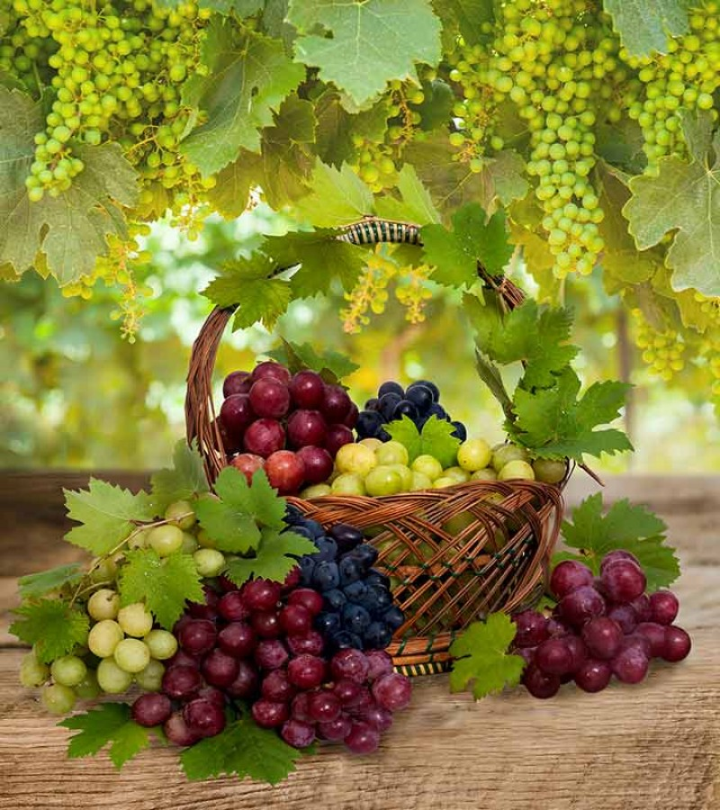 Name: grapes.jpg Views: 3 Size: 207.8 KB